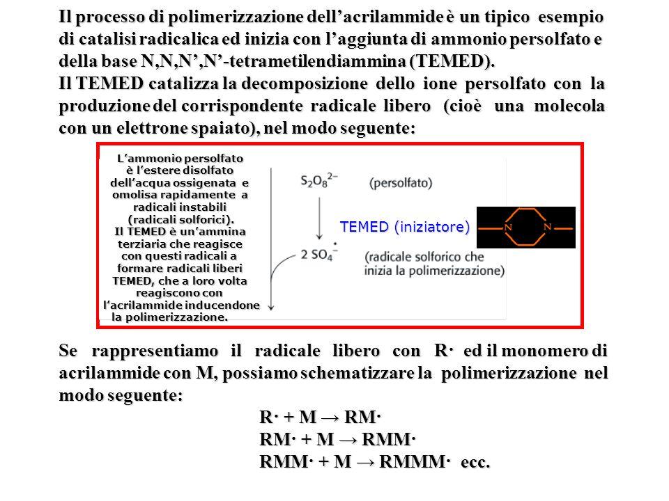 Il processo di polimerizzazione dellacrilammide è un tipico esempio di catalisi radicalica ed inizia con laggiunta di ammonio persolfato e della base N,N,N,N-tetrametilendiammina (TEMED).