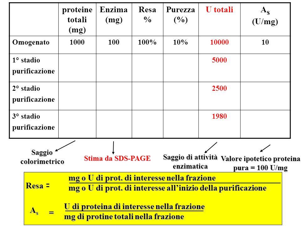 mg o U di prot.di interesse nella frazione mg o U di prot.
