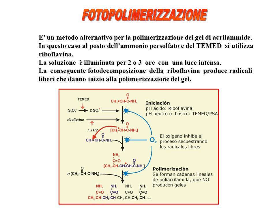 E un metodo alternativo per la polimerizzazione dei gel di acrilammide.