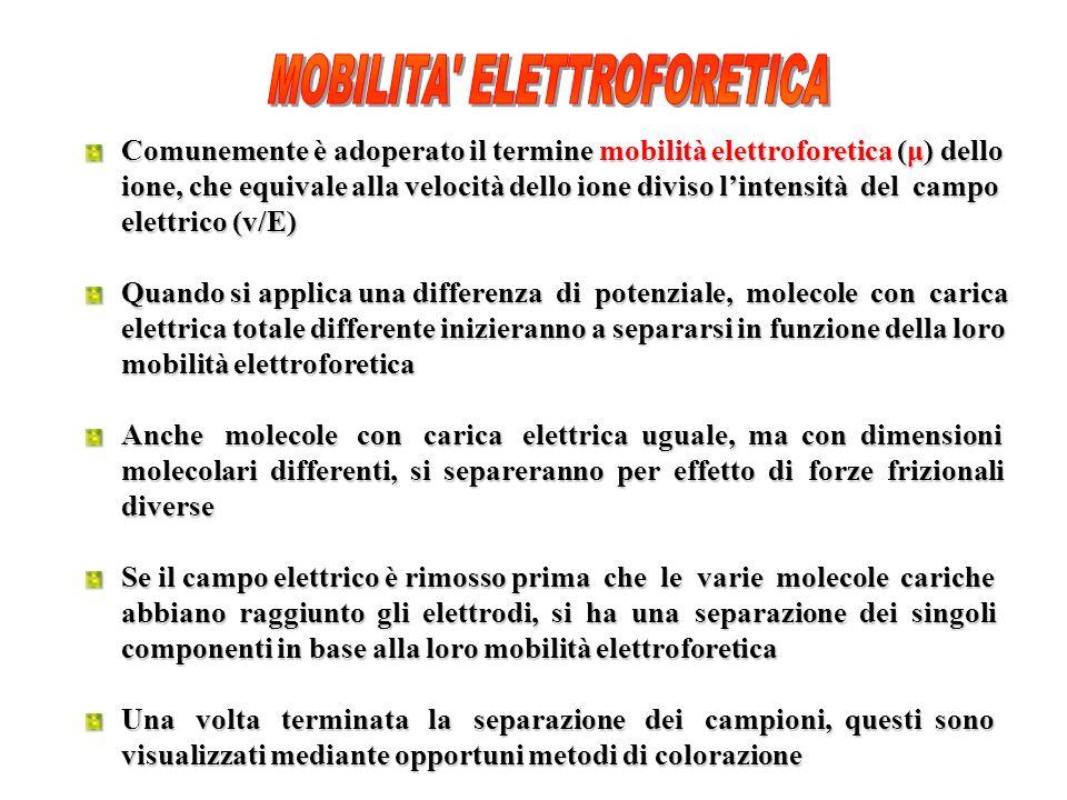 Comunemente è adoperato il termine mobilità elettroforetica (μ) dello ione, che equivale alla velocità dello ione diviso lintensità del campo elettrico (v/E) Quando si applica una differenza di potenziale, molecole con carica elettrica totale differente inizieranno a separarsi in funzione della loro mobilità elettroforetica Anche molecole con carica elettrica uguale, ma con dimensioni molecolari differenti, si separeranno per effetto di forze frizionali diverse Se il campo elettrico è rimosso prima che le varie molecole cariche abbiano raggiunto gli elettrodi, si ha una separazione dei singoli componenti in base alla loro mobilità elettroforetica Una volta terminata la separazione dei campioni, questi sono visualizzati mediante opportuni metodi di colorazione