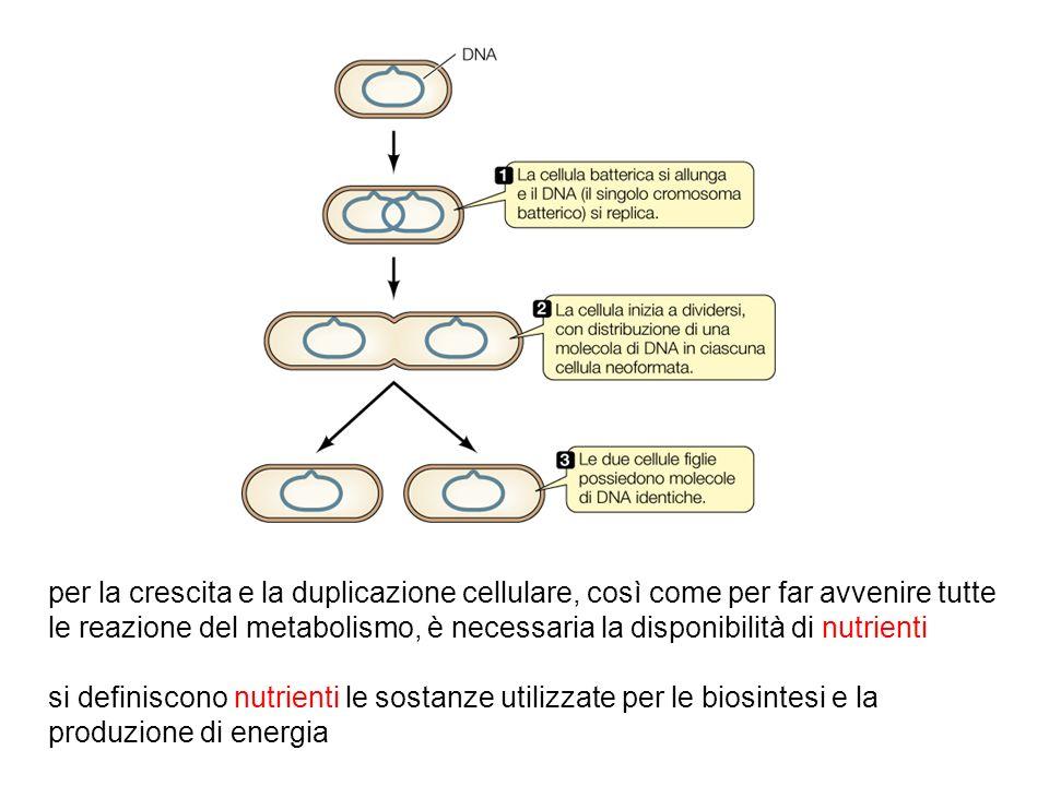 esigenze nutrizionali dei microrganismi meccanismi di assunzione dei nutrienti metodi di coltivazione dei microrganismi in laboratorio