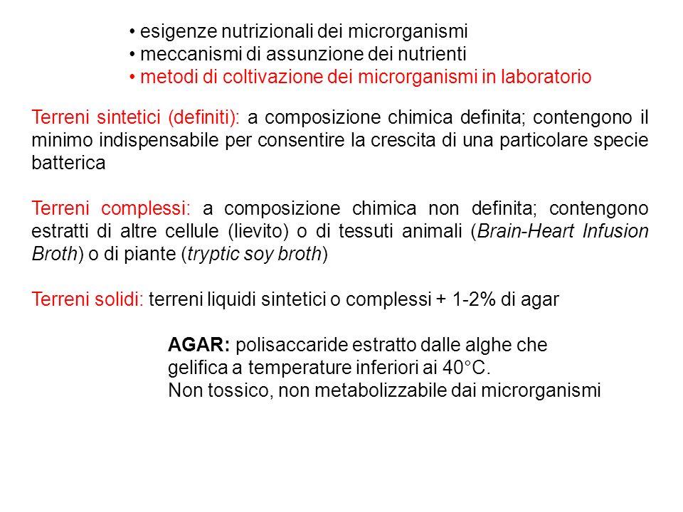 esigenze nutrizionali dei microrganismi meccanismi di assunzione dei nutrienti metodi di coltivazione dei microrganismi in laboratorio Terreni sintetici (definiti): a composizione chimica definita; contengono il minimo indispensabile per consentire la crescita di una particolare specie batterica Terreni complessi: a composizione chimica non definita; contengono estratti di altre cellule (lievito) o di tessuti animali (Brain-Heart Infusion Broth) o di piante (tryptic soy broth) Terreni solidi: terreni liquidi sintetici o complessi + 1-2% di agar AGAR: polisaccaride estratto dalle alghe che gelifica a temperature inferiori ai 40°C.
