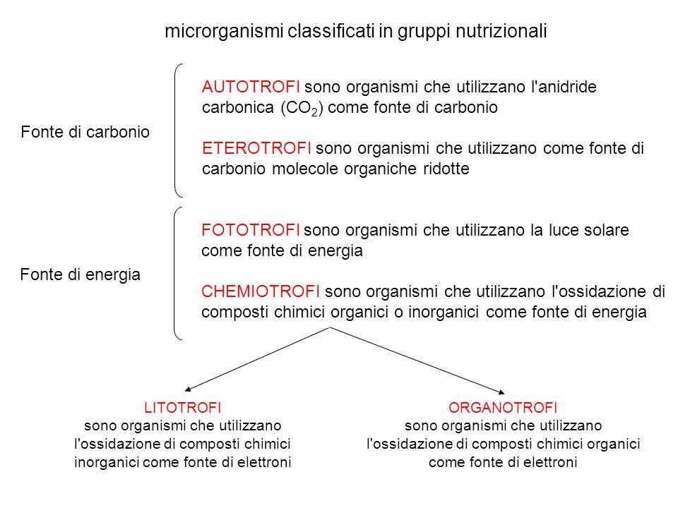 microrganismi classificati in gruppi nutrizionali AUTOTROFI sono organismi che utilizzano l anidride carbonica (CO 2 ) come fonte di carbonio ETEROTROFI sono organismi che utilizzano come fonte di carbonio molecole organiche ridotte Fonte di carbonio FOTOTROFI sono organismi che utilizzano la luce solare come fonte di energia CHEMIOTROFI sono organismi che utilizzano l ossidazione di composti chimici organici o inorganici come fonte di energia Fonte di energia LITOTROFI sono organismi che utilizzano l ossidazione di composti chimici inorganici come fonte di elettroni ORGANOTROFI sono organismi che utilizzano l ossidazione di composti chimici organici come fonte di elettroni