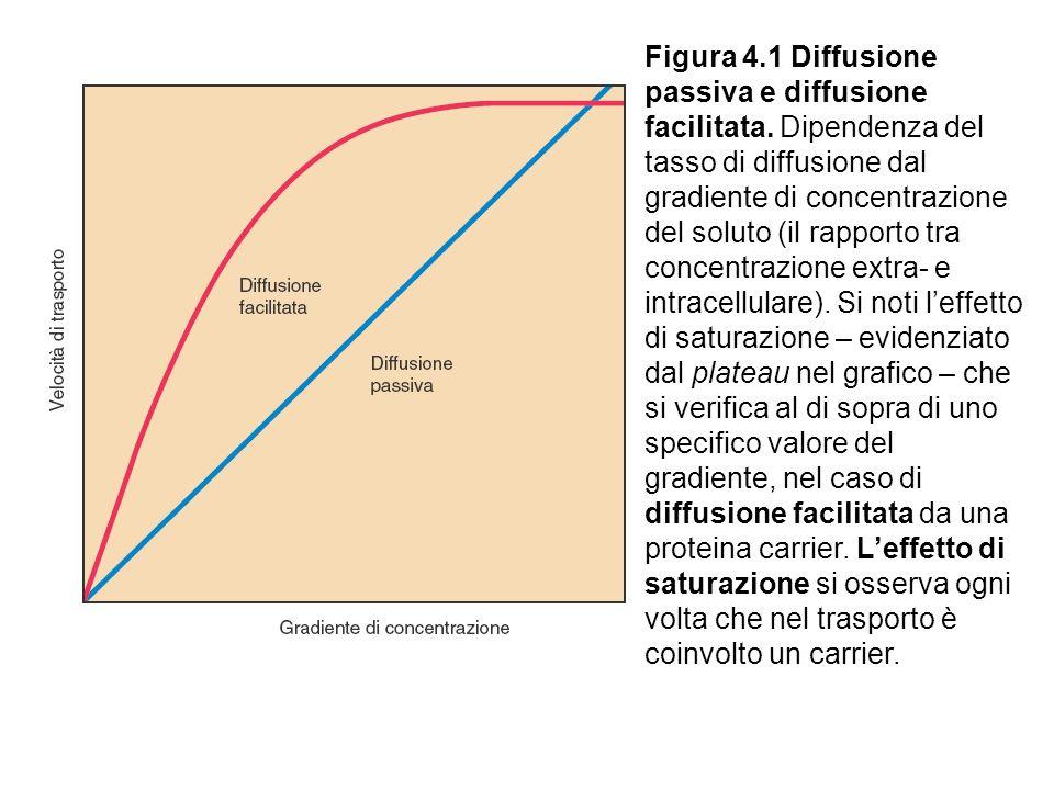 Figura 4.1 Diffusione passiva e diffusione facilitata.