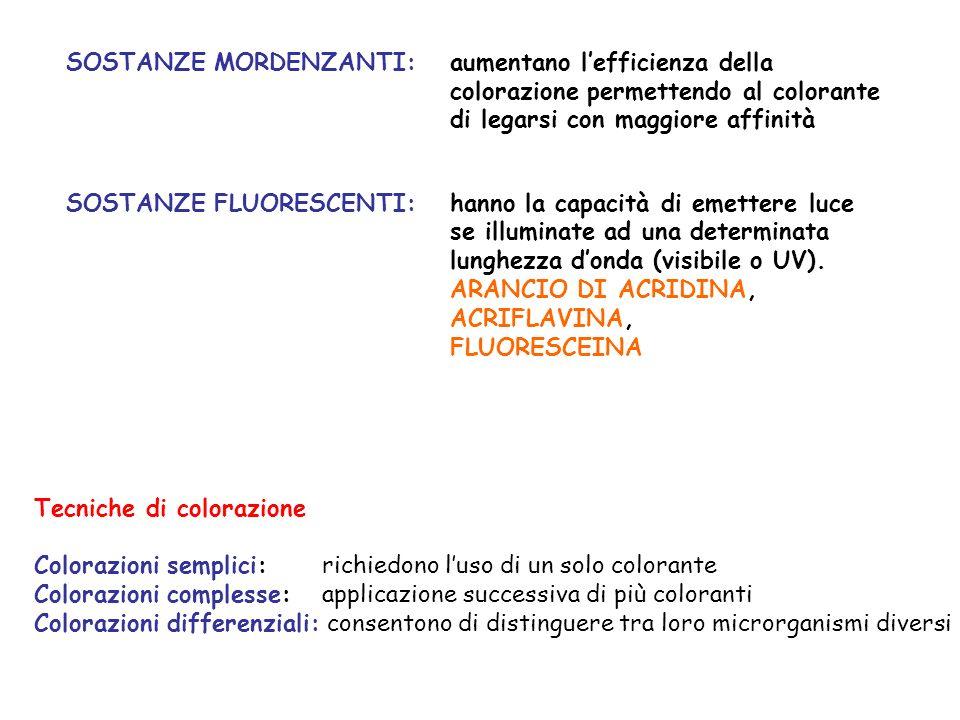 SOSTANZE MORDENZANTI:aumentano lefficienza della colorazione permettendo al colorante di legarsi con maggiore affinità SOSTANZE FLUORESCENTI:hanno la