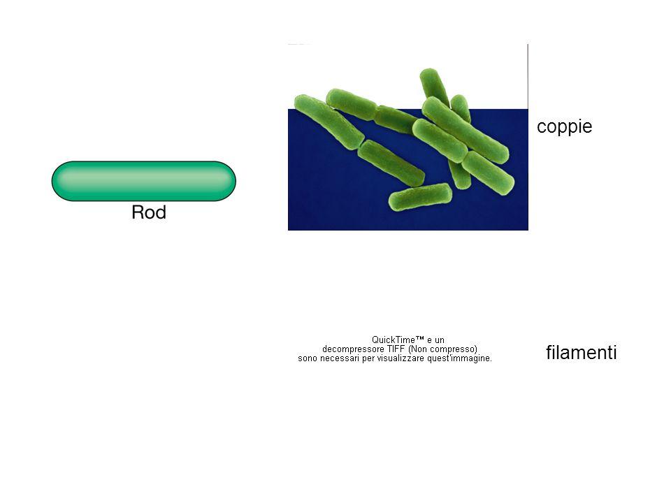 filamenti coppie
