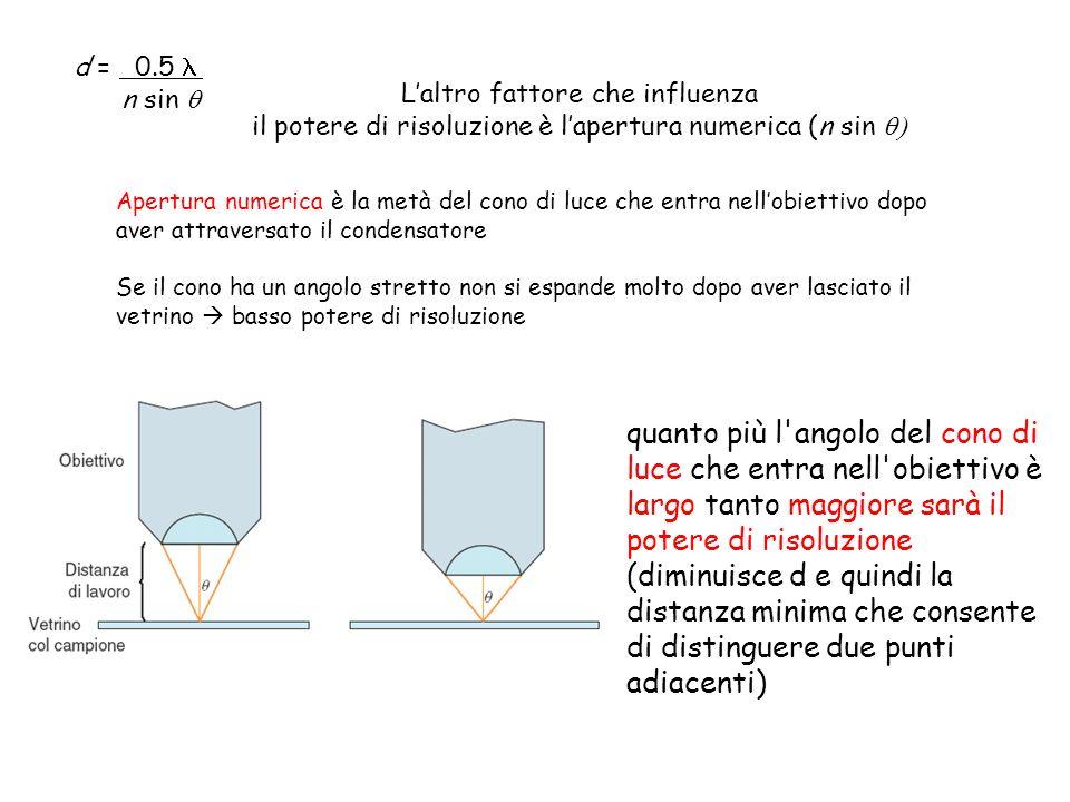 Apertura numerica è la metà del cono di luce che entra nellobiettivo dopo aver attraversato il condensatore Se il cono ha un angolo stretto non si esp