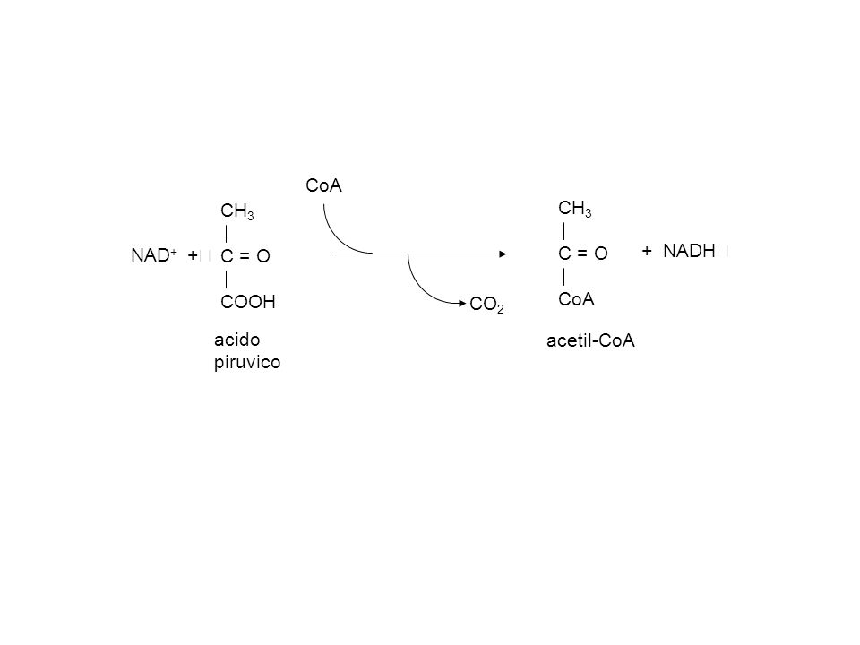 acido piruvico CH 3 C = O COOH CH 3 C = O CoA acetil-CoA CoA CO 2 NAD + + + NADH