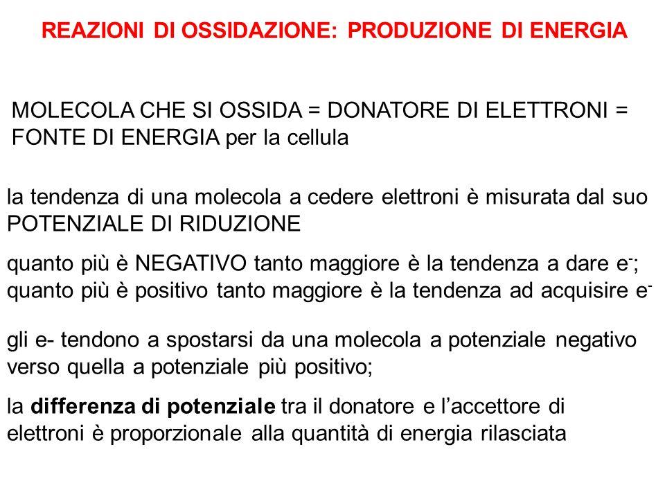 REAZIONI DI OSSIDAZIONE: PRODUZIONE DI ENERGIA MOLECOLA CHE SI OSSIDA = DONATORE DI ELETTRONI = FONTE DI ENERGIA per la cellula la tendenza di una mol