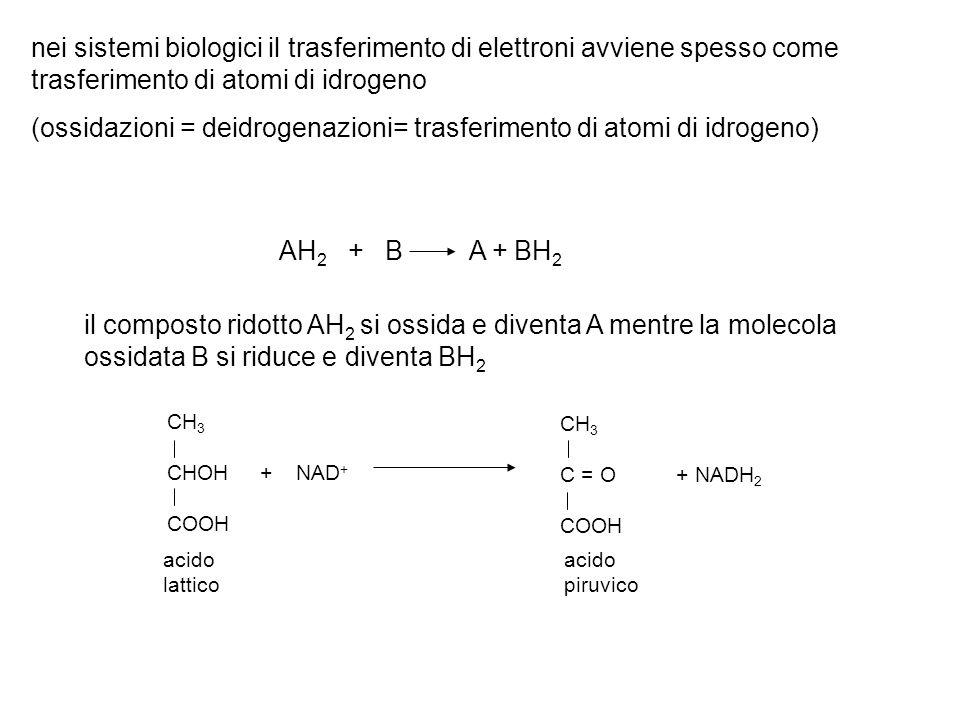 AH 2 + B A + BH 2 il composto ridotto AH 2 si ossida e diventa A mentre la molecola ossidata B si riduce e diventa BH 2 CH 3 CHOH + NAD + COOH CH 3 C