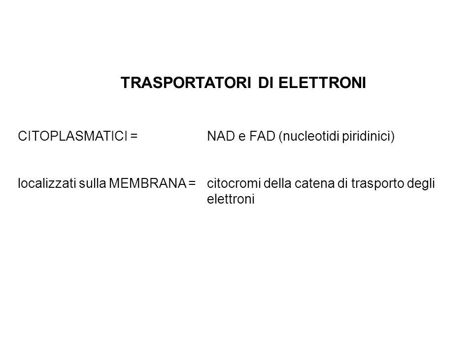 TRASPORTATORI DI ELETTRONI CITOPLASMATICI = NAD e FAD (nucleotidi piridinici) localizzati sulla MEMBRANA = citocromi della catena di trasporto degli e