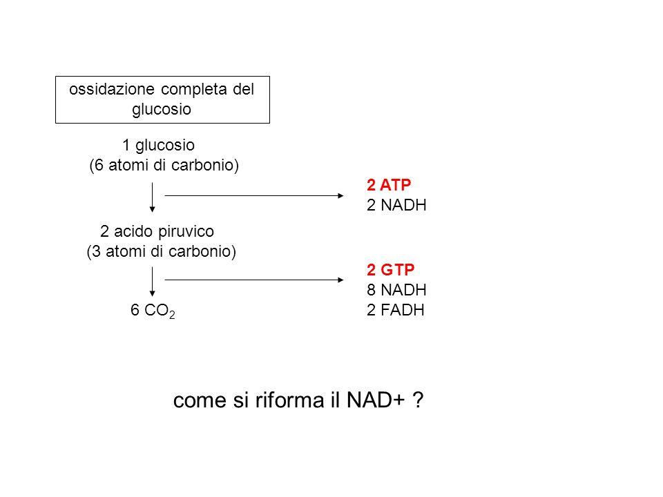 1 glucosio (6 atomi di carbonio) 2 acido piruvico (3 atomi di carbonio) 6 CO 2 ossidazione completa del glucosio 2 ATP 2 NADH 2 GTP 8 NADH 2 FADH come
