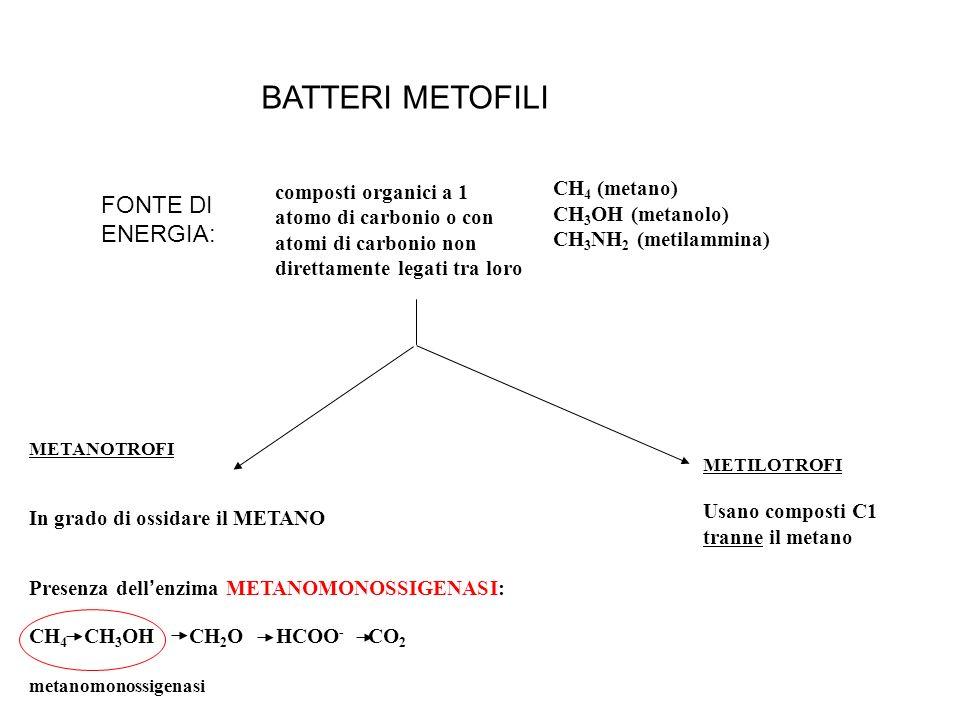CH 4 (metano) CH 3 OH (metanolo) CH 3 NH 2 (metilammina) composti organici a 1 atomo di carbonio o con atomi di carbonio non direttamente legati tra l