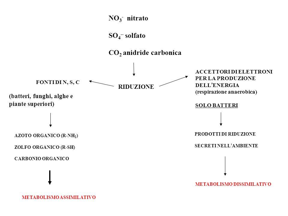 RIDUZIONE AZOTO ORGANICO (R-NH 2 ) ZOLFO ORGANICO (R-SH) CARBONIO ORGANICO NO 3 - nitrato SO 4 -- solfato CO 2 anidride carbonica FONTI DI N, S, C (ba