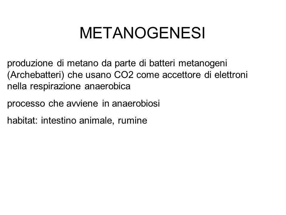 METANOGENESI produzione di metano da parte di batteri metanogeni (Archebatteri) che usano CO2 come accettore di elettroni nella respirazione anaerobic