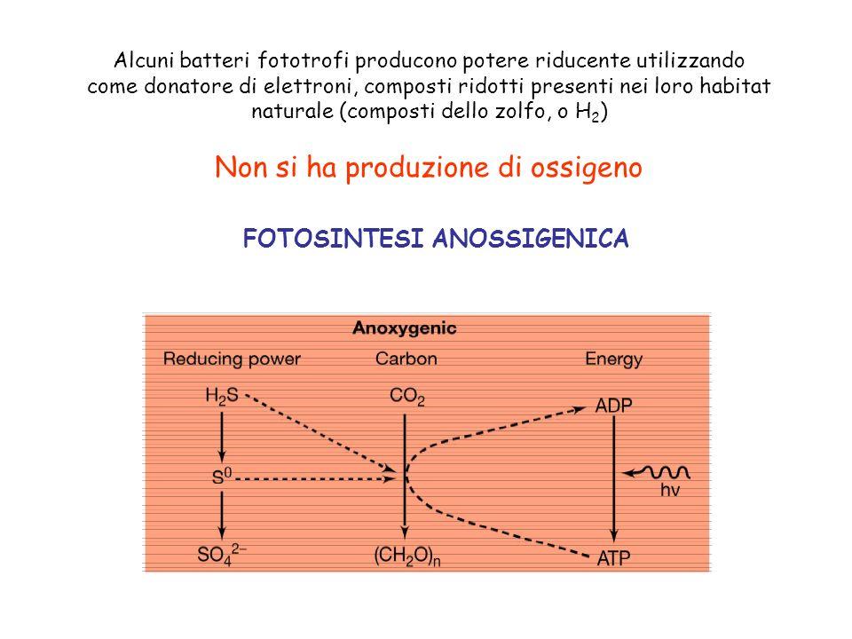 Alcuni batteri fototrofi producono potere riducente utilizzando come donatore di elettroni, composti ridotti presenti nei loro habitat naturale (compo