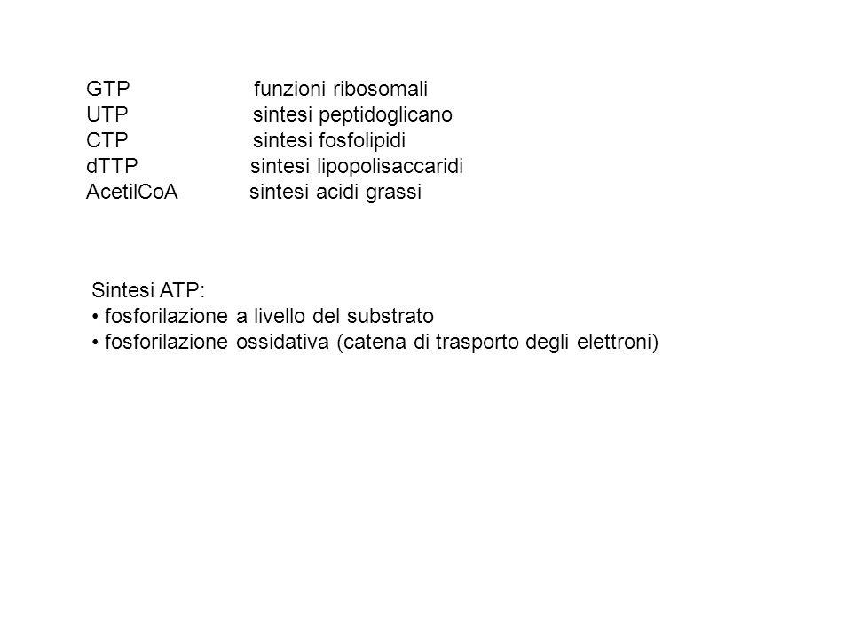 ciclo acidi tricarbossilici