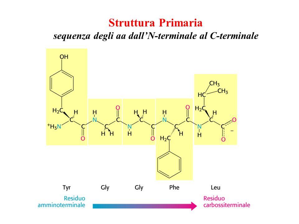 Struttura Primaria sequenza degli aa dallN-terminale al C-terminale