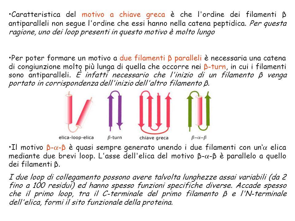 Caratteristica del motivo a chiave greca è che l'ordine dei filamenti β antiparalleli non segue l'ordine che essi hanno nella catena peptidica. Per qu