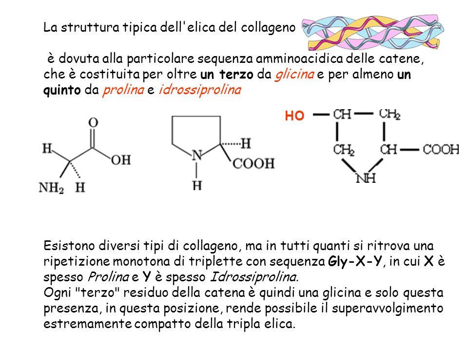 La struttura tipica dell'elica del collageno è dovuta alla particolare sequenza amminoacidica delle catene, che è costituita per oltre un terzo da gli
