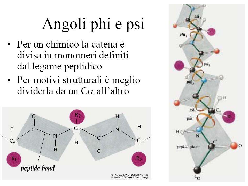 Angoli di torsione dello scheletro covalente di un polipeptide Sono mostrati 2 gruppi peptidici planari.