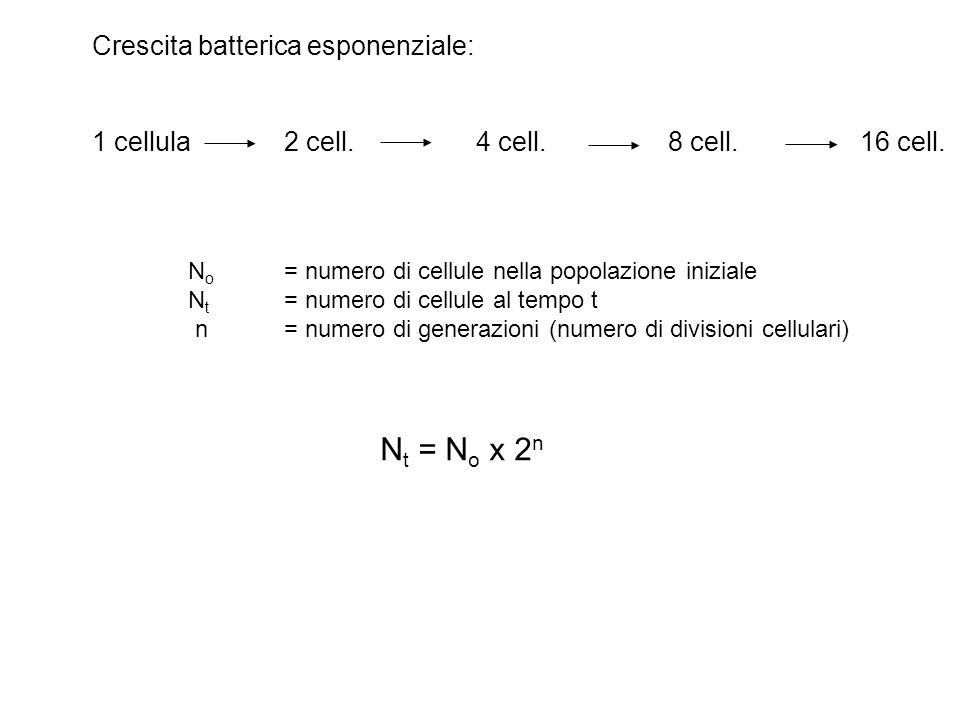 Crescita batterica esponenziale: 1 cellula2 cell.4 cell.8 cell.16 cell. N o = numero di cellule nella popolazione iniziale N t = numero di cellule al