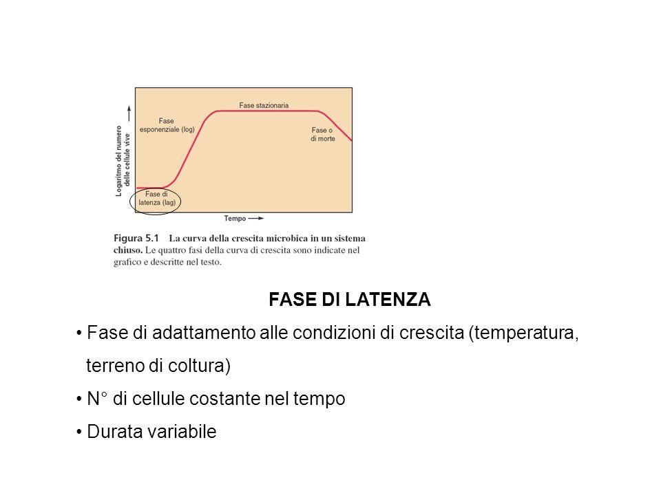 FASE DI LATENZA Fase di adattamento alle condizioni di crescita (temperatura, terreno di coltura) N° di cellule costante nel tempo Durata variabile
