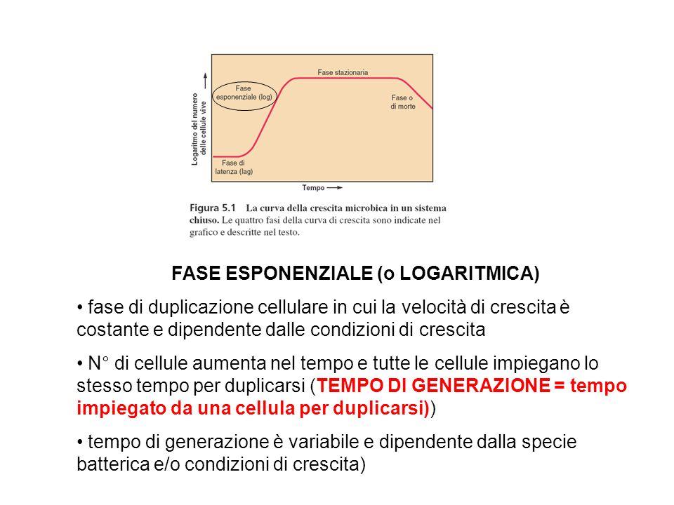 FASE ESPONENZIALE (o LOGARITMICA) fase di duplicazione cellulare in cui la velocità di crescita è costante e dipendente dalle condizioni di crescita N