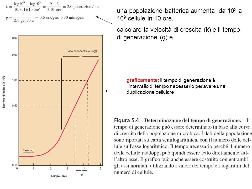una popolazione batterica aumenta da 10 3 a 10 9 cellule in 10 ore. calcolare la velocità di crescita (k) e il tempo di generazione (g) e graficamente