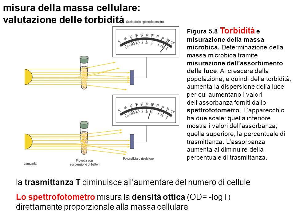 Figura 5.8 Torbidità e misurazione della massa microbica. Determinazione della massa microbica tramite misurazione dellassorbimento della luce. Al cre