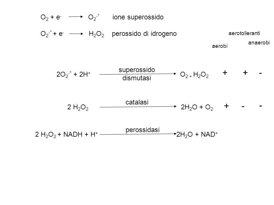 O 2 + e - O 2 -* ione superossido O 2 -* + e - H 2 O 2 perossido di idrogeno 2O 2 -* + 2H + O 2 + H 2 O 2 superossido dismutasi 2 H 2 O 2 2H 2 O + O 2