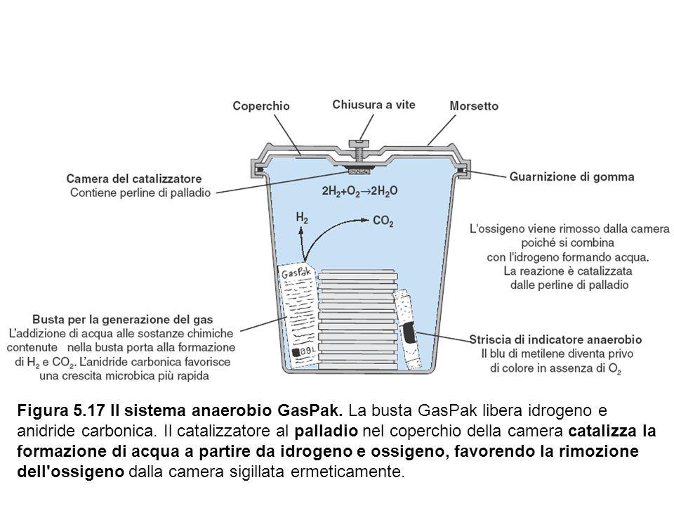 Figura 5.17 Il sistema anaerobio GasPak. La busta GasPak libera idrogeno e anidride carbonica. Il catalizzatore al palladio nel coperchio della camera