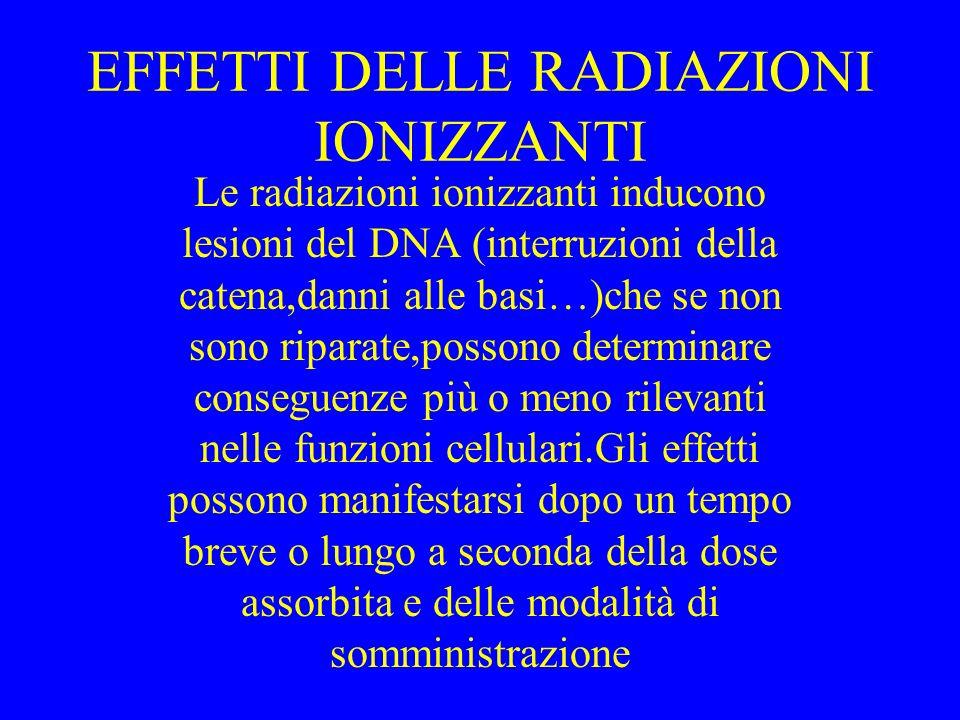 EFFETTI DELLE RADIAZIONI IONIZZANTI Le radiazioni ionizzanti inducono lesioni del DNA (interruzioni della catena,danni alle basi…)che se non sono ripa