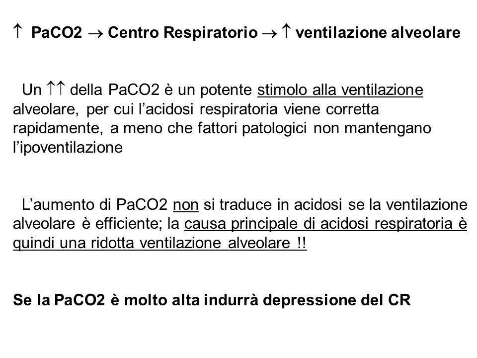 PaCO2 Centro Respiratorio ventilazione alveolare Un della PaCO2 è un potente stimolo alla ventilazione alveolare, per cui lacidosi respiratoria viene