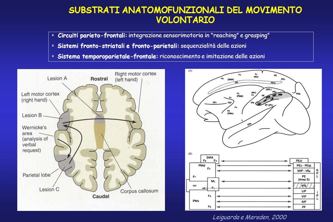 SUBSTRATI ANATOMOFUNZIONALI DEL MOVIMENTO VOLONTARIO Leiguarda e Marsden, 2000 Circuiti parieto-frontali: integrazione sensorimotoria in reaching e gr