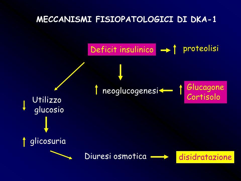 Deficit insulinico neoglucogenesi Glucagone Cortisolo proteolisi Utilizzo glucosio glicosuria Diuresi osmotica disidratazione MECCANISMI FISIOPATOLOGI