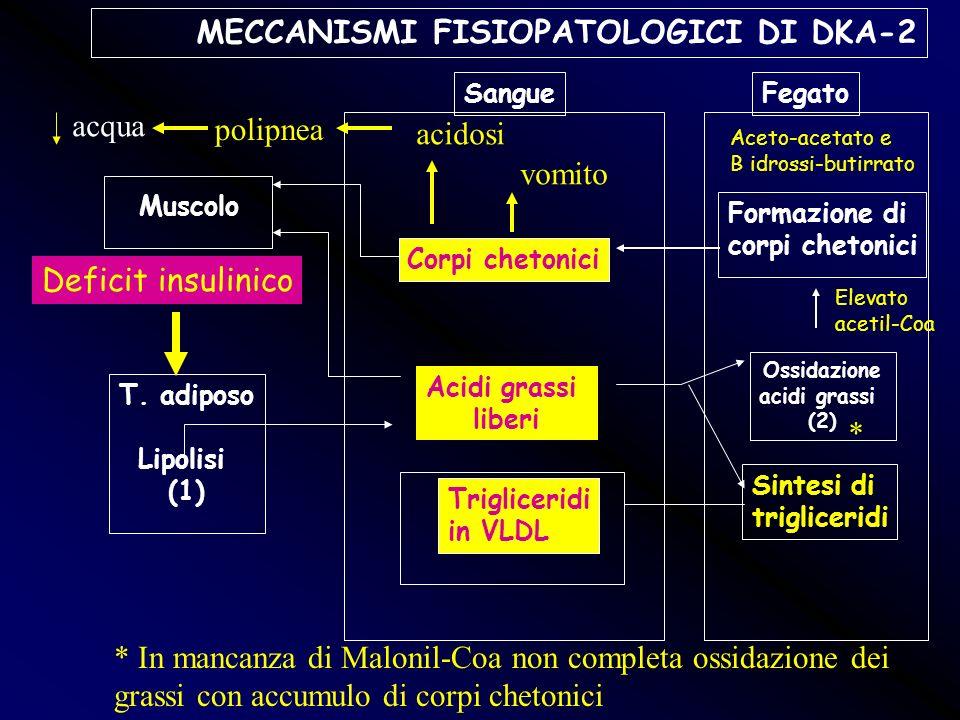 MECCANISMI FISIOPATOLOGICI DI DKA-2 Muscolo T. adiposo Lipolisi (1) Sangue Corpi chetonici Acidi grassi liberi Trigliceridi in VLDL Fegato Formazione