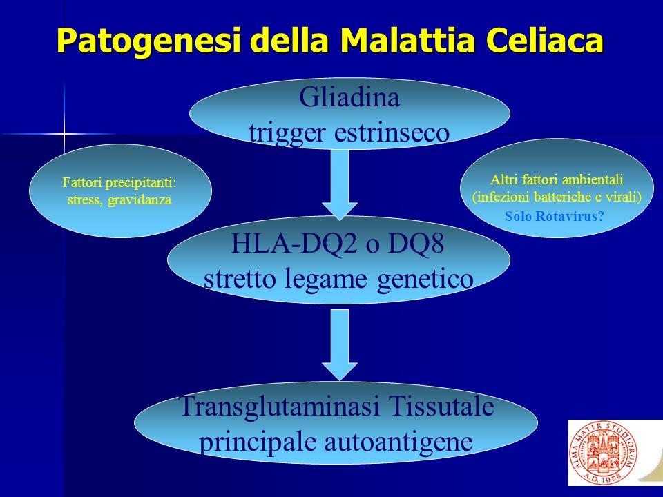 Patogenesi della Malattia Celiaca Gliadina trigger estrinseco HLA-DQ2 o DQ8 stretto legame genetico Transglutaminasi Tissutale principale autoantigene