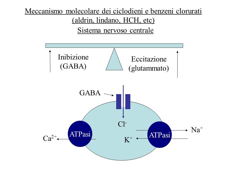 Meccanismo molecolare dei ciclodieni e benzeni clorurati (aldrin, lindano, HCH, etc) Eccitazione (glutammato) Inibizione (GABA) Sistema nervoso centra