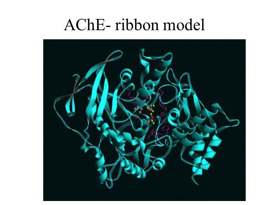 AChE- ribbon model