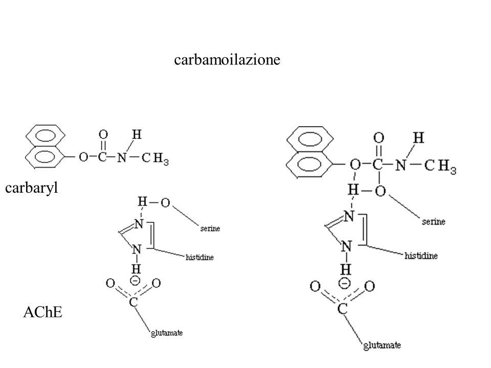 carbaryl AChE carbamoilazione
