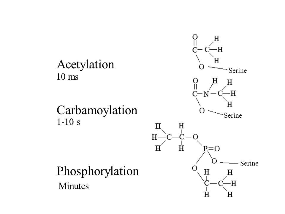 Serine Acetylation Carbamoylation Phosphorylation 10 ms 1-10 s Minutes
