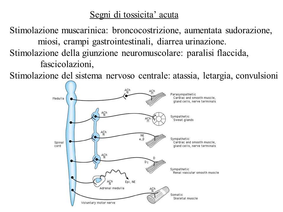 Segni di tossicita acuta Stimolazione muscarinica: broncocostrizione, aumentata sudorazione, miosi, crampi gastrointestinali, diarrea urinazione. Stim