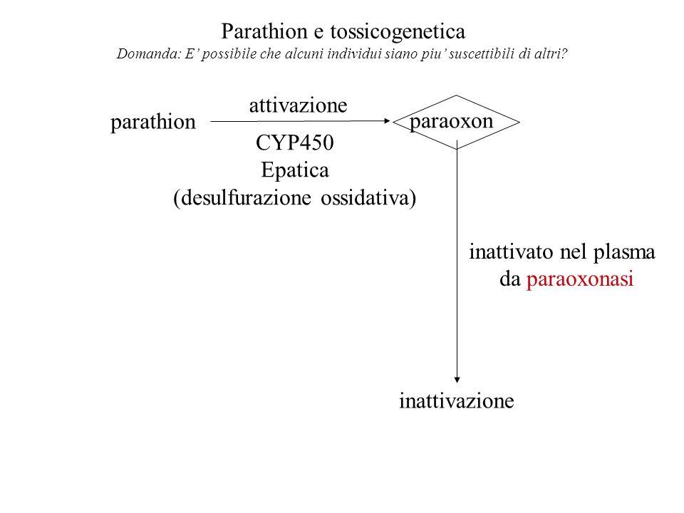 Parathion e tossicogenetica Domanda: E possibile che alcuni individui siano piu suscettibili di altri? parathion paraoxon attivazione CYP450 Epatica (