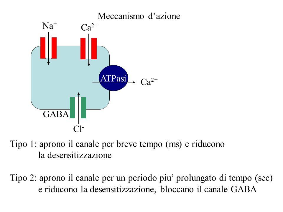 Meccanismo dazione Na + ATPasi Ca 2+ Tipo 1: aprono il canale per breve tempo (ms) e riducono la desensitizzazione Tipo 2: aprono il canale per un per