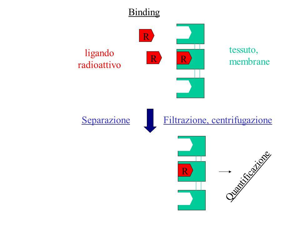 Concentrazione di Farmaco radioattivo Radioattivita legata Radioattivita legata in presenza di 10 µM di farmaco non radioattivo Radioattivo: 100 Ci/mmol 50 µg/tubo Dati sperimentali
