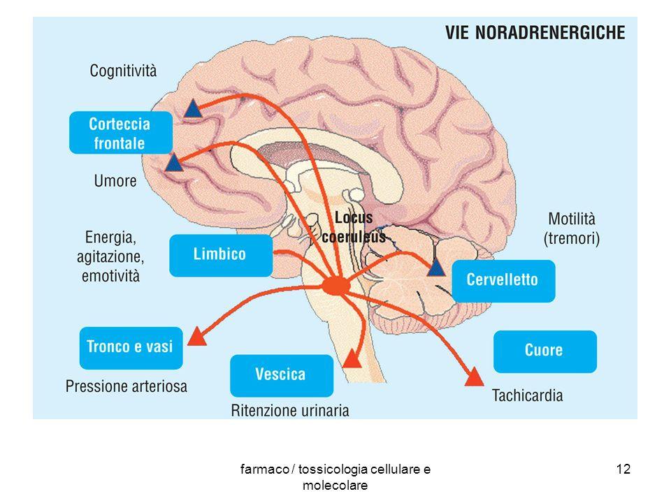 farmaco / tossicologia cellulare e molecolare 12