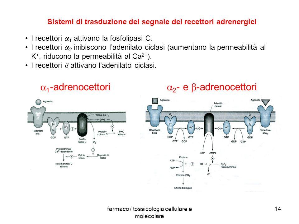 farmaco / tossicologia cellulare e molecolare 14 Sistemi di trasduzione del segnale dei recettori adrenergici 1 -adrenocettori 2 - e -adrenocettori I