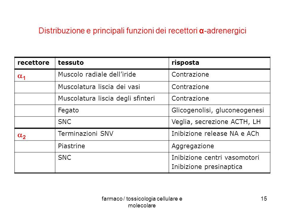 farmaco / tossicologia cellulare e molecolare 15 Distribuzione e principali funzioni dei recettori α-adrenergici recettoretessutorisposta 1 Muscolo ra