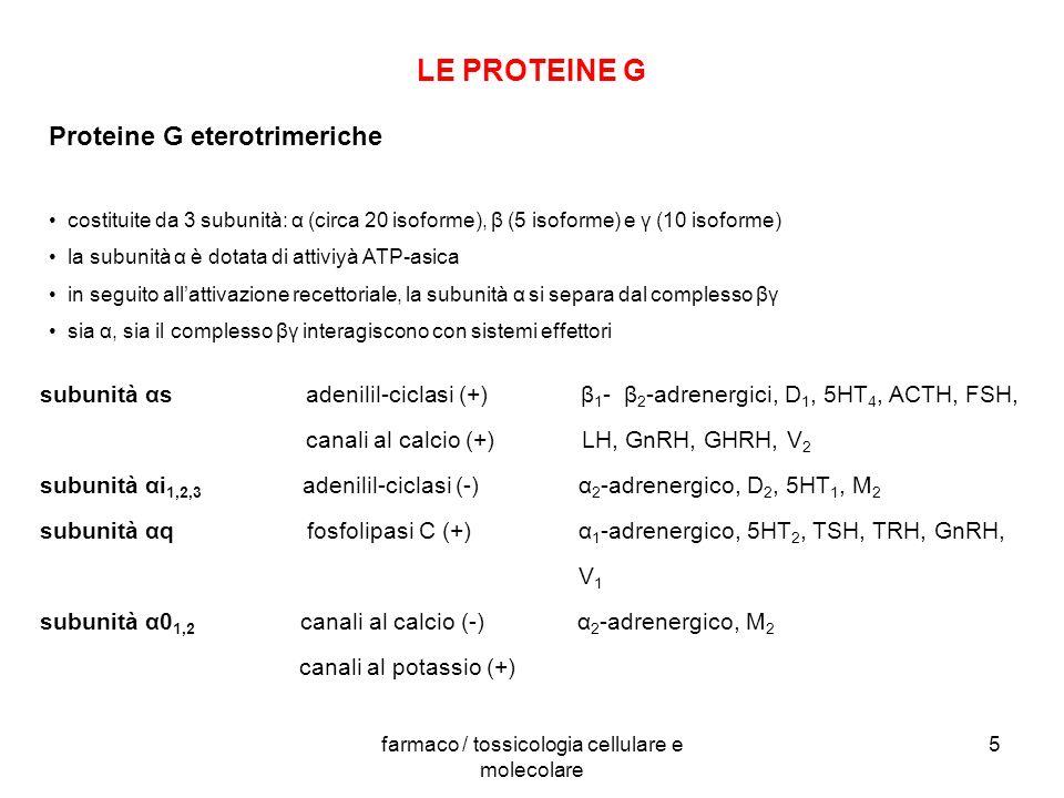 farmaco / tossicologia cellulare e molecolare 5 LE PROTEINE G Proteine G eterotrimeriche costituite da 3 subunità: α (circa 20 isoforme), β (5 isoform